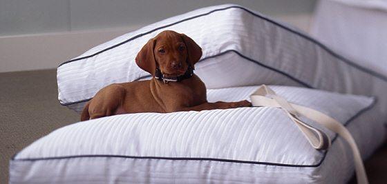 pet friendly hotels in Arlington VA